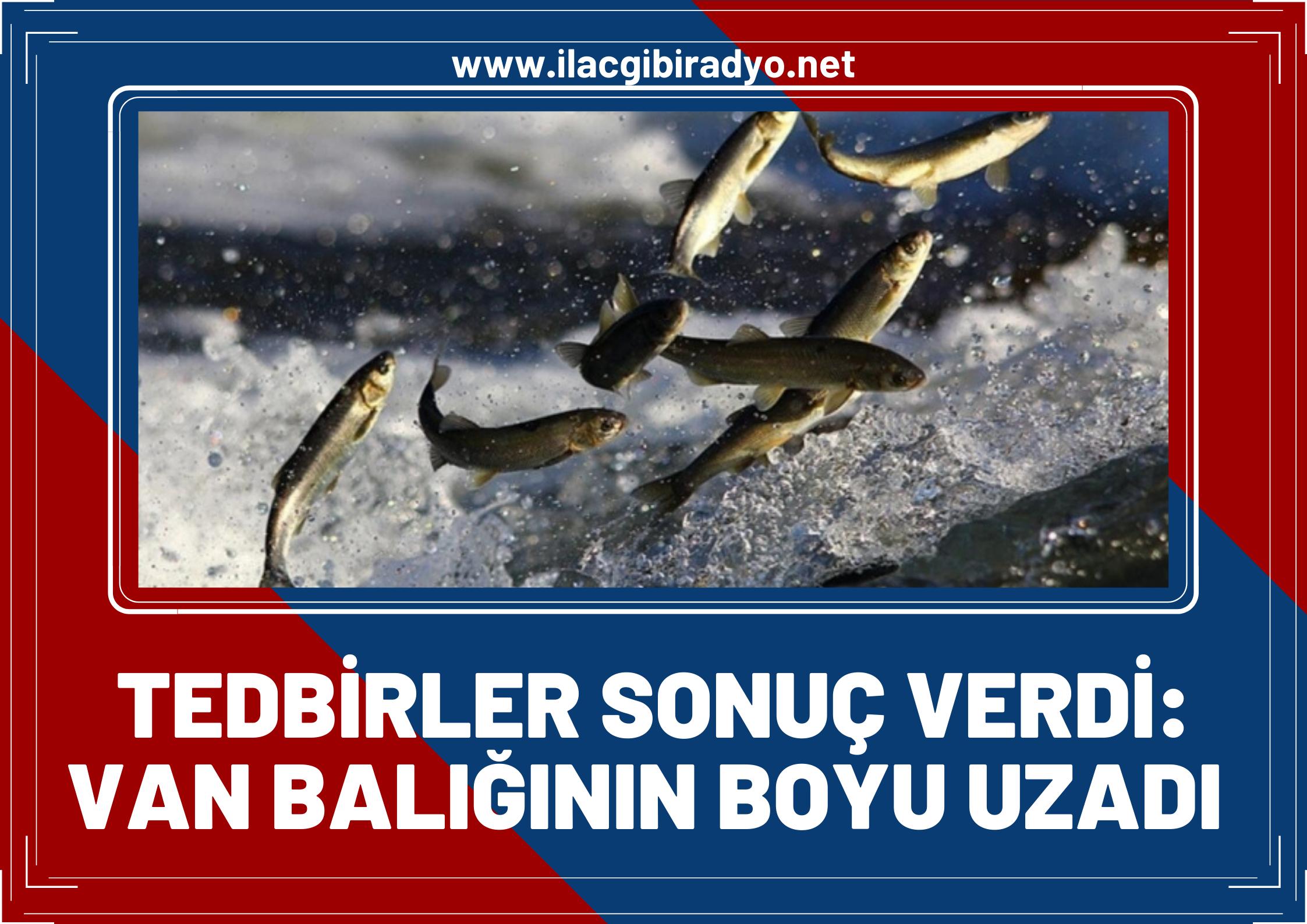 Alınan tedbirler sonuç verdi… Van Balığının boyu uzadı!