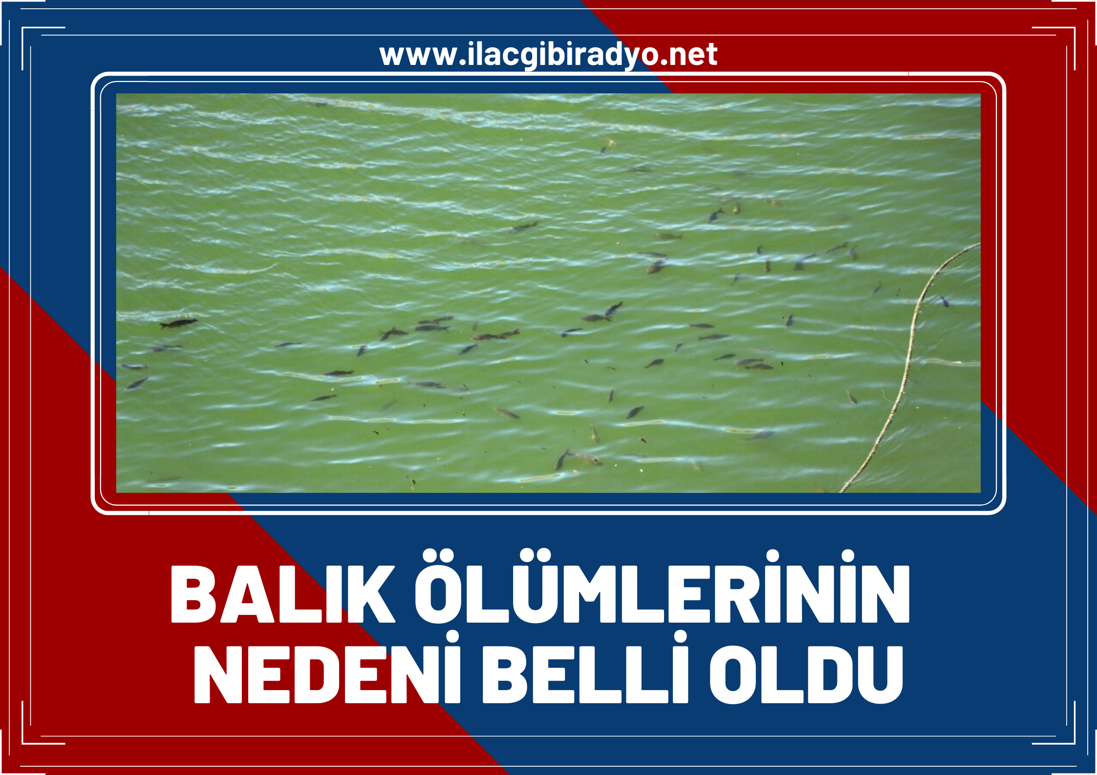 Balık ölümlerinin nedeni belli oldu!