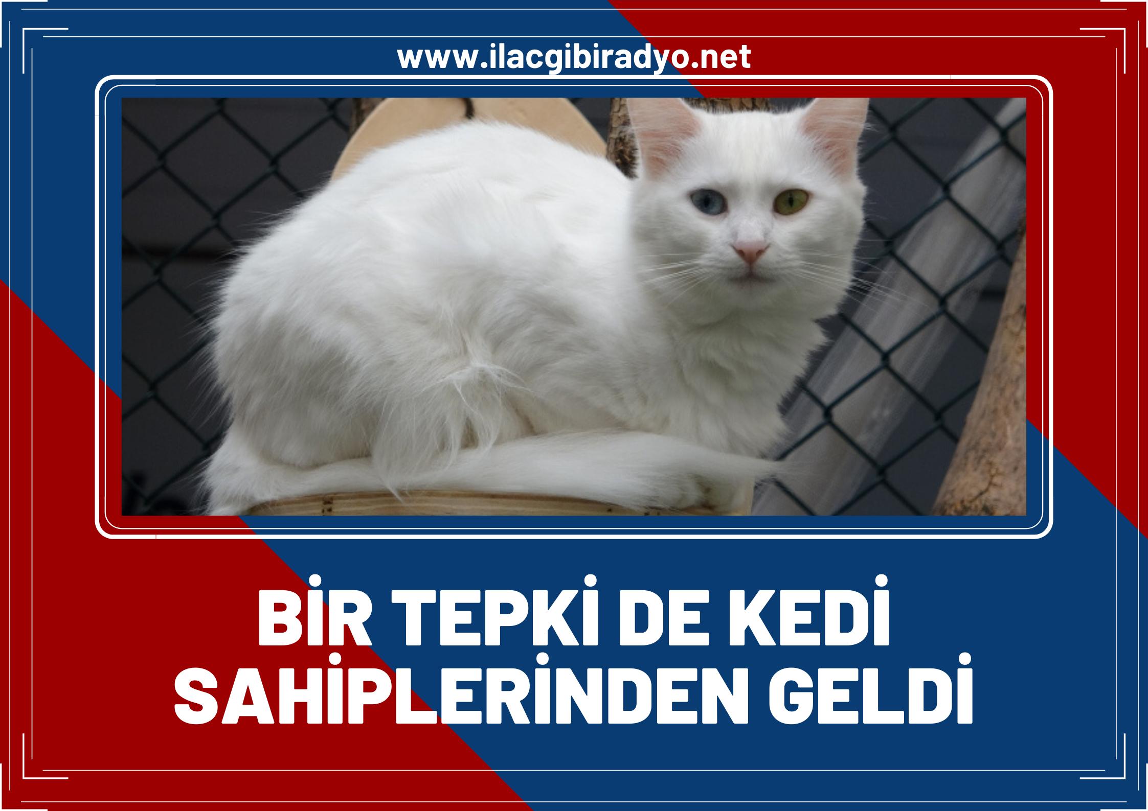 Van kedisi sahipleri Helsinki Üniversitesinin yaptığı araştırmaya tepki gösterdi