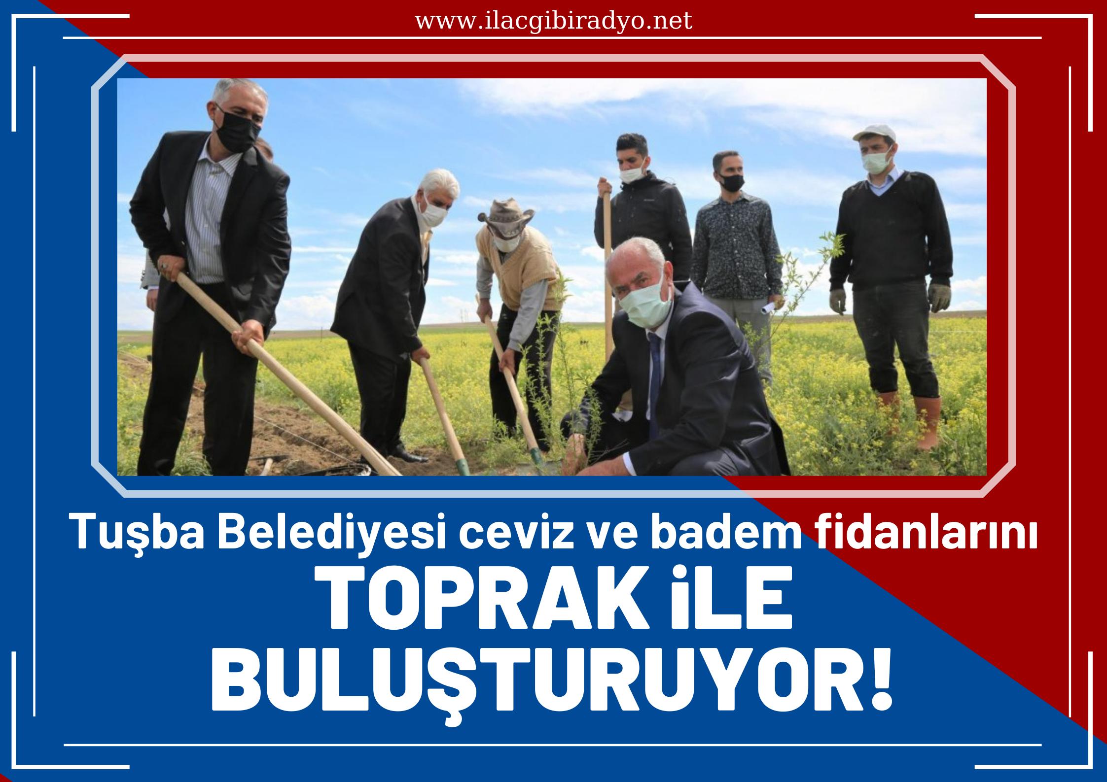 Tuşba Belediyesi ceviz ve badem fidanlarını toprak ile buluşturuluyor!