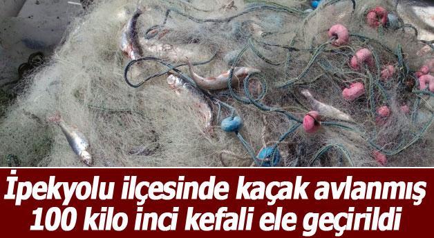 Kaçak avlanmış 100 kilo inci kefali ele geçirildi