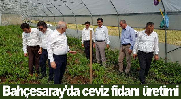 Bahçesaray'da ceviz fidanı üretimi