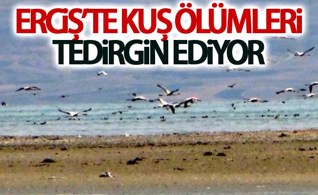 Erciş'te kuş ölümleri tedirgin ediyor