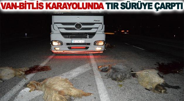 Van-Bitlis karayolunda tır sürüye çarptı