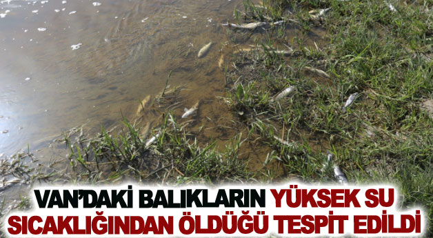 Van'daki balıkların yüksek su sıcaklığından öldüğü tespit edildi