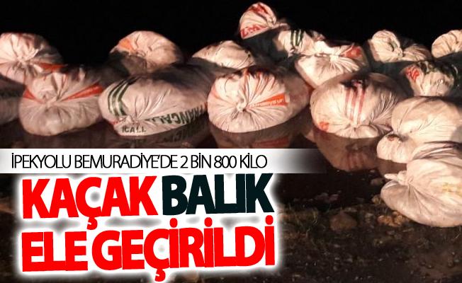 Muradiye'de 2 bin 800 kilo kaçak balık ele geçirildi