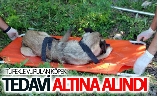 Van'da av tüfeği ile vurulduğu belirlenen köpek, tedavi altına alındı